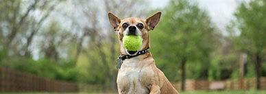 Как научить собаку командам «апорт», «принеси», «взять» и «фас»?