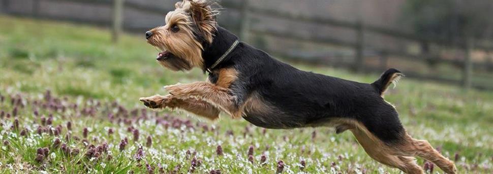 Как научить собаку команде «ко мне»?