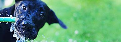 Как научить собаку команде «нельзя» или «фу»?