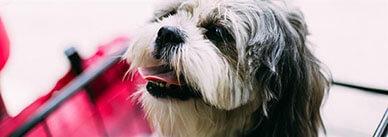 Как научить собаку команде «голос»?
