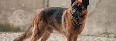 Как научить собаку команде «стоять»?