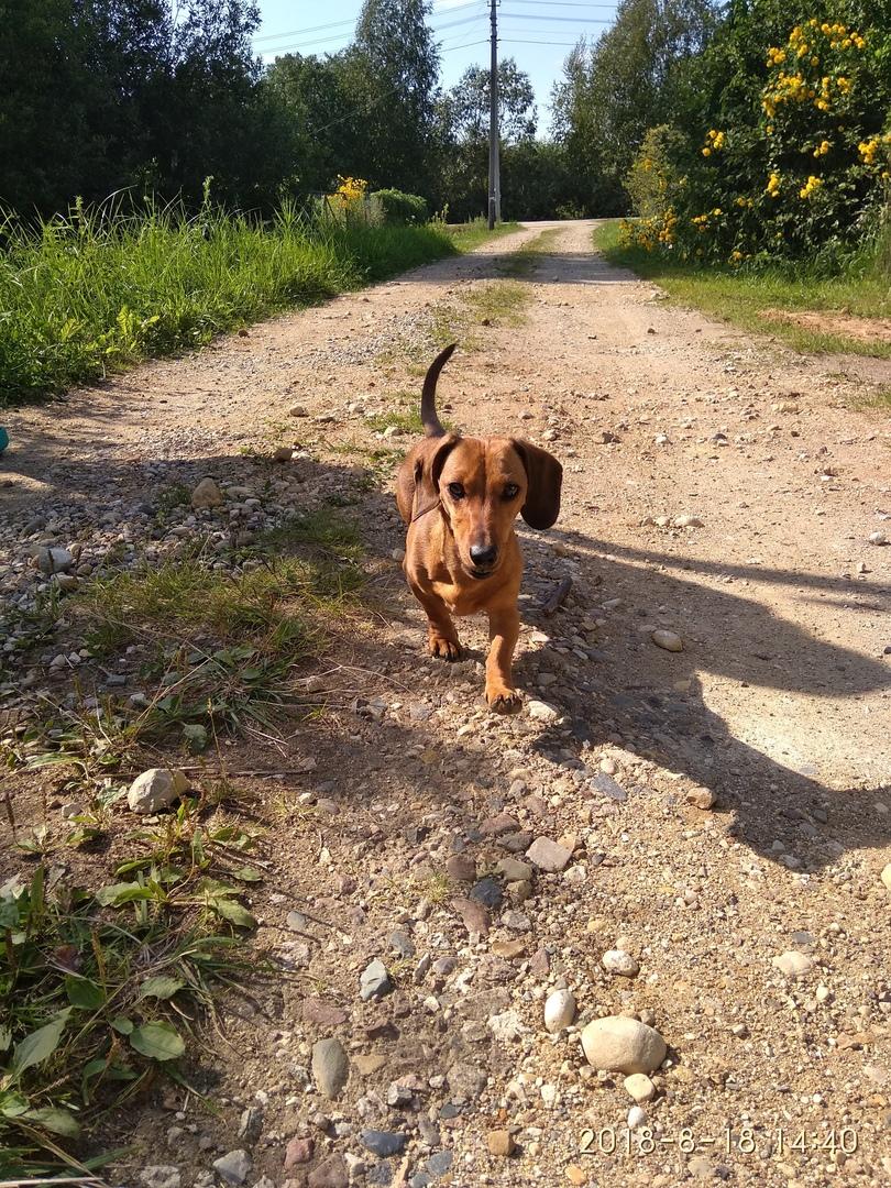 Корм для собак педигри 13 кг цена